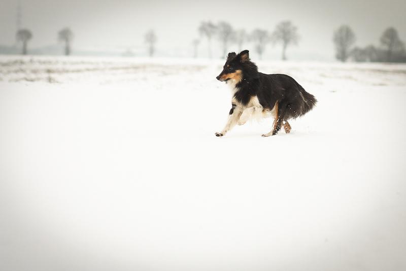 Schneeeee ❄❅