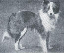 Zesta (28-09-1911)