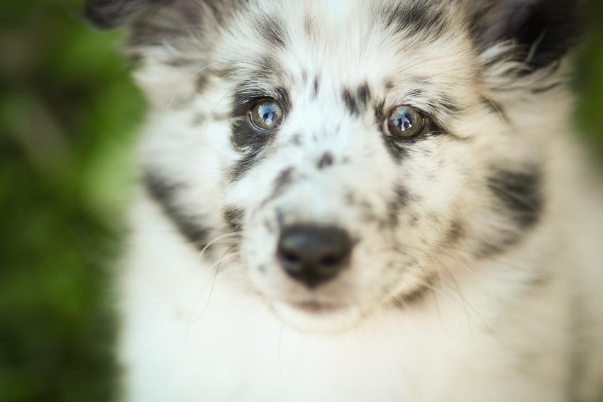 Erstes mal Hundeplatz